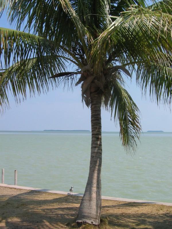 Florida, USA (4 of 5)