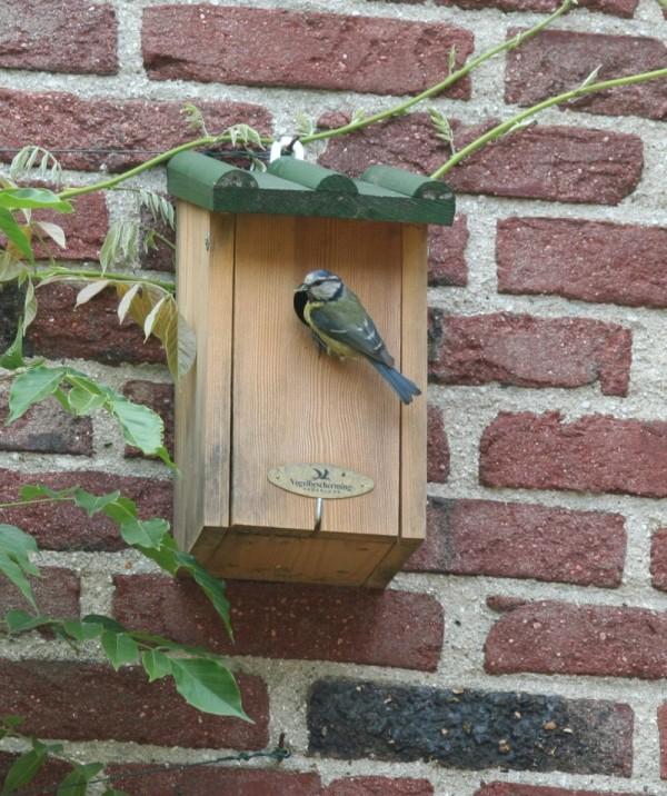 Birding: Blue Tit (1 of 6)