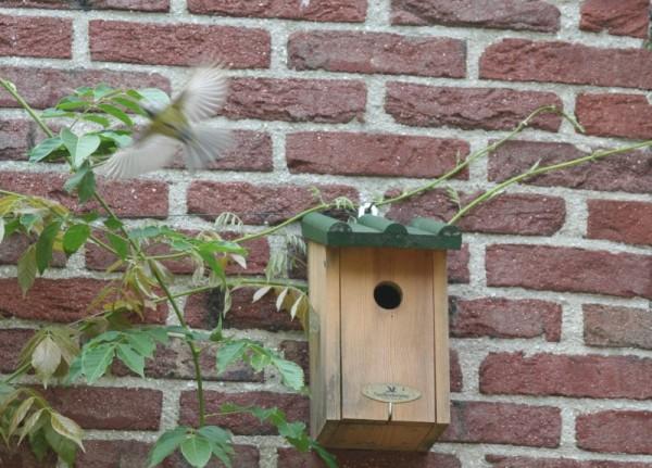 Birding: Blue tit (5 of 6)