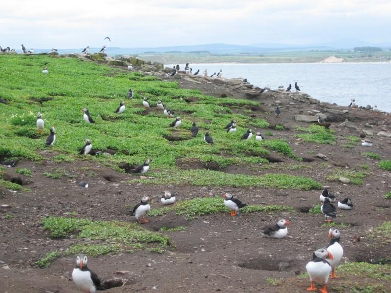 Farne Islands (19 of 23)