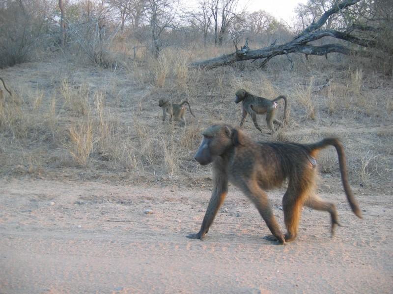 Kruger park (1 of 5)