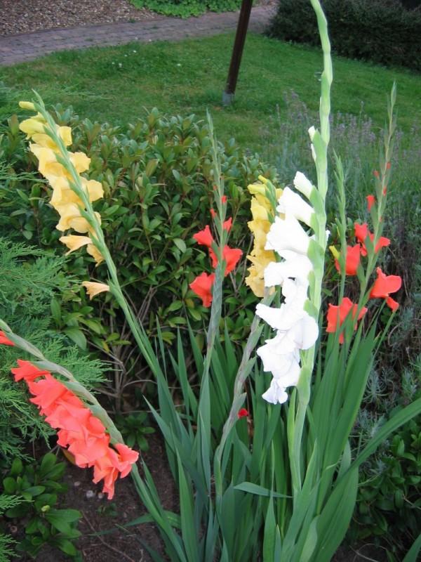 Garden Time (2 of 3)