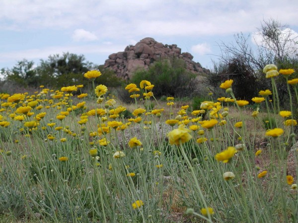 Field of flowers near the Boulders