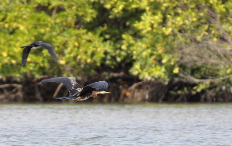sénégal 43 / casamance / l'île aux oiseaux