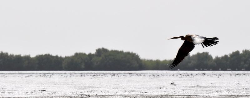 sénégal 45 / casamance / l'île aux oiseaux