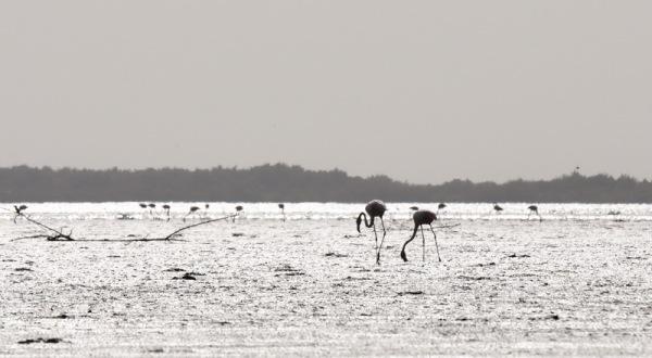 sénégal 46 / casamance / l'île aux oiseaux