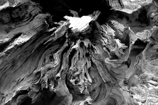 Nature carved II