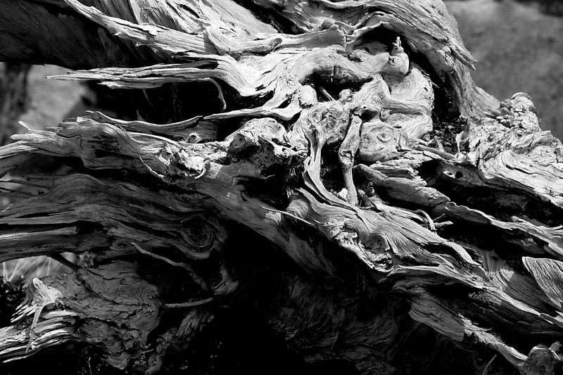 Nature carved III