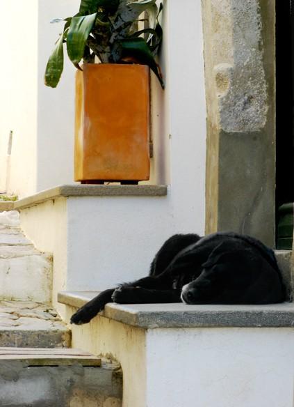 Perrito dormido