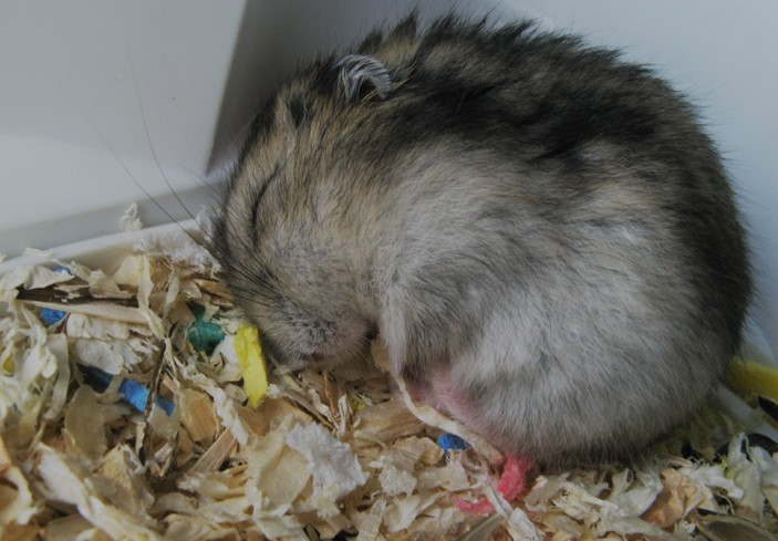 Lila duerme