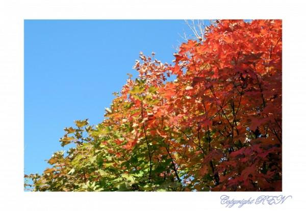Fall II