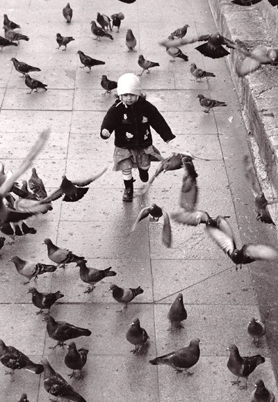 Young child chasing pigeons in Eminonu, Istanbul