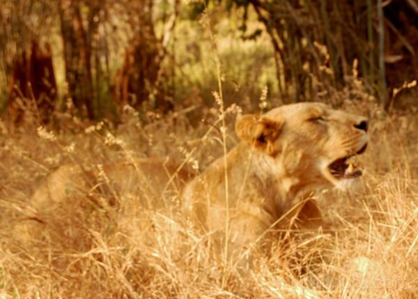 aslan leo