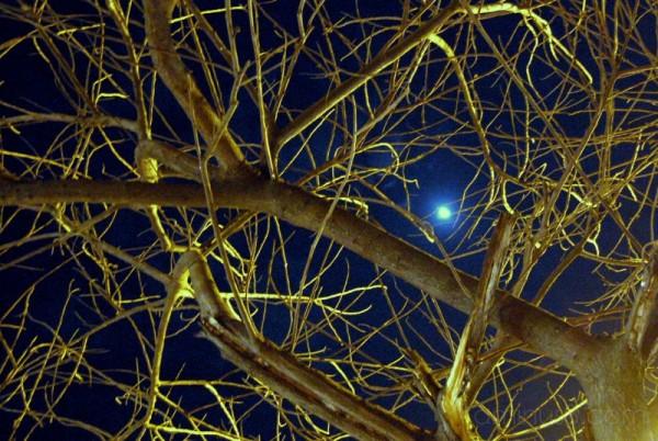 bark branch tree bare moon moonlight eerie