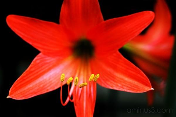 song mike flower pollen stamen macro nikon D40