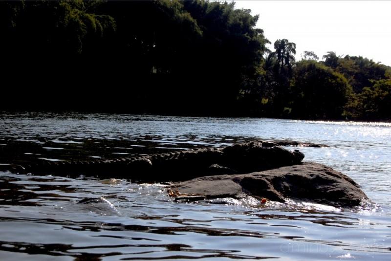 croc on rock