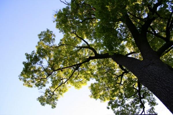30/05/2007 backyard foliage