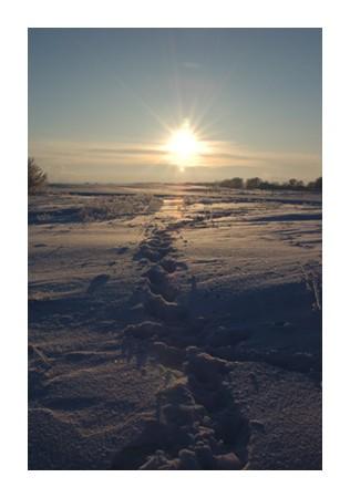 Snowy Trails in Saskatchewan