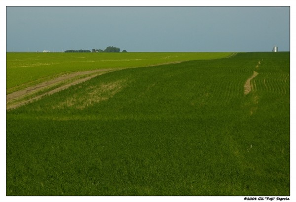 Contrasting Crops