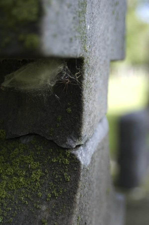 Cemetary Spider