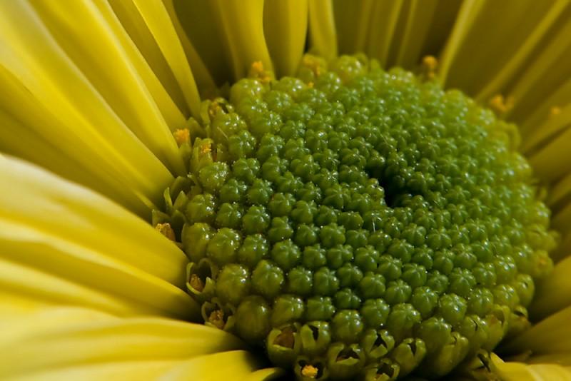 Pollen ready