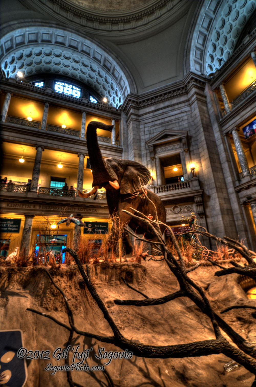 Elephantine Greeting at the Smithsonian