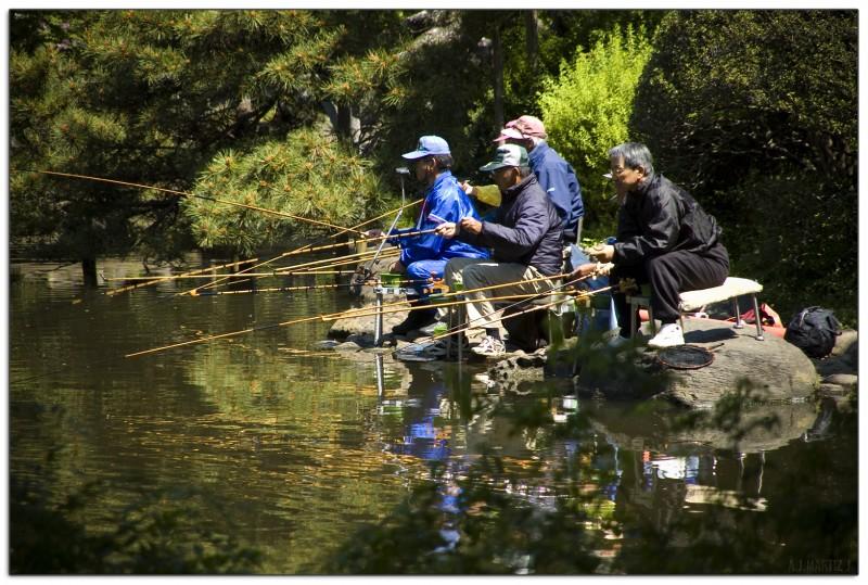 Elders Fishing on a Park