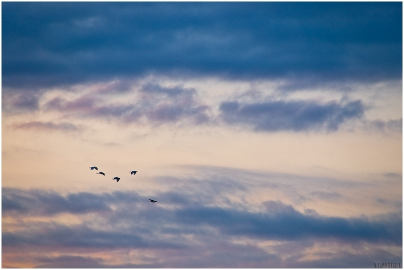 Early Morning Fly