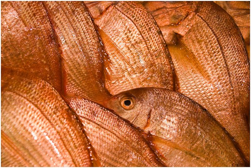 Fishography