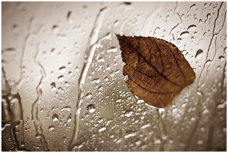 The Dream of Autumn