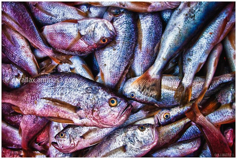 Fishograma