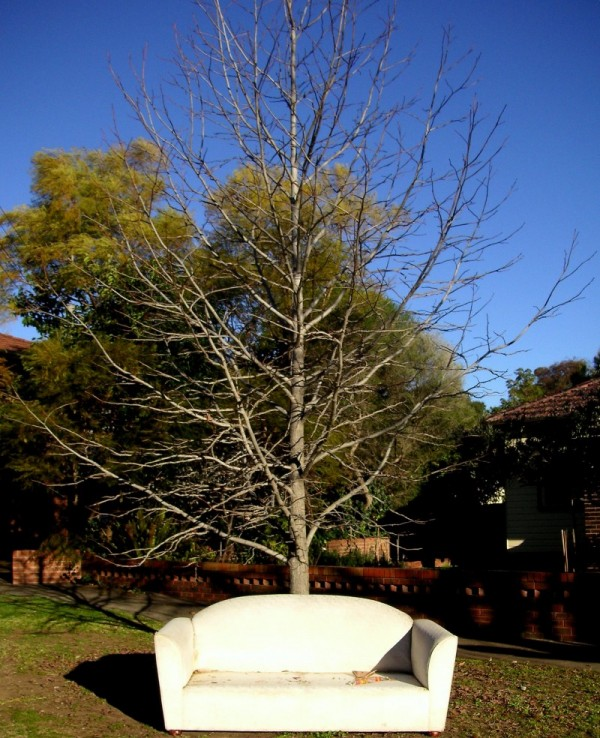 A Sofa under a Tree