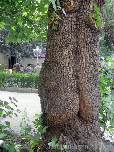 +12 Trees ;)