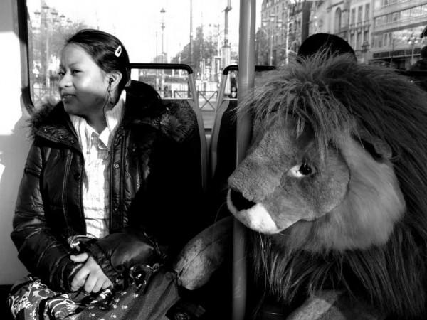 Meeting a Lion