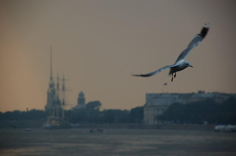 bird, getaway