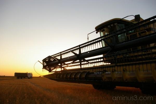 Harvestime Silhouette