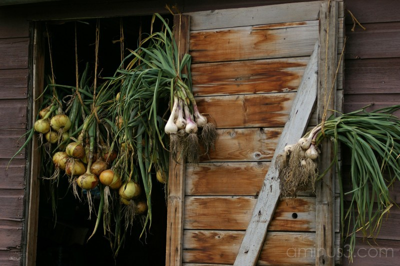 Drying the Onions