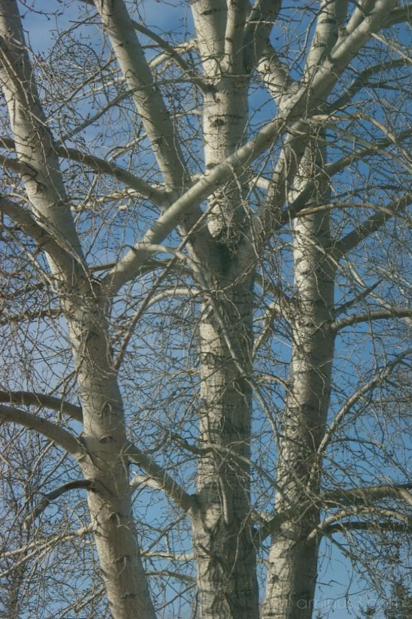 Naked Trees #2