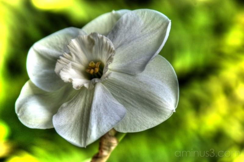 Spring Flower#2