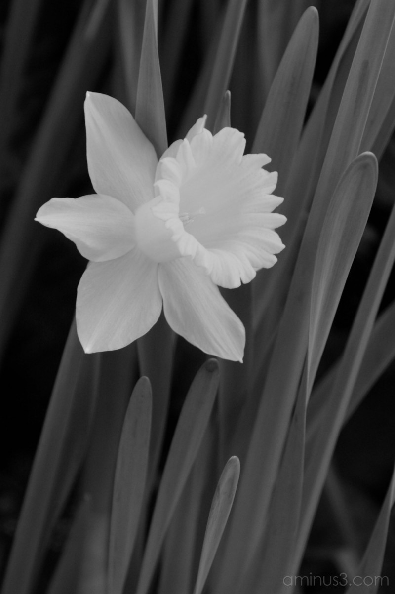 """Sun"" Flower #2"