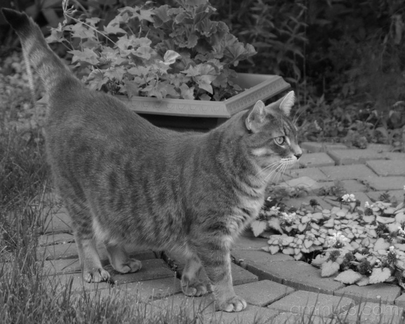 Toby in the Garden