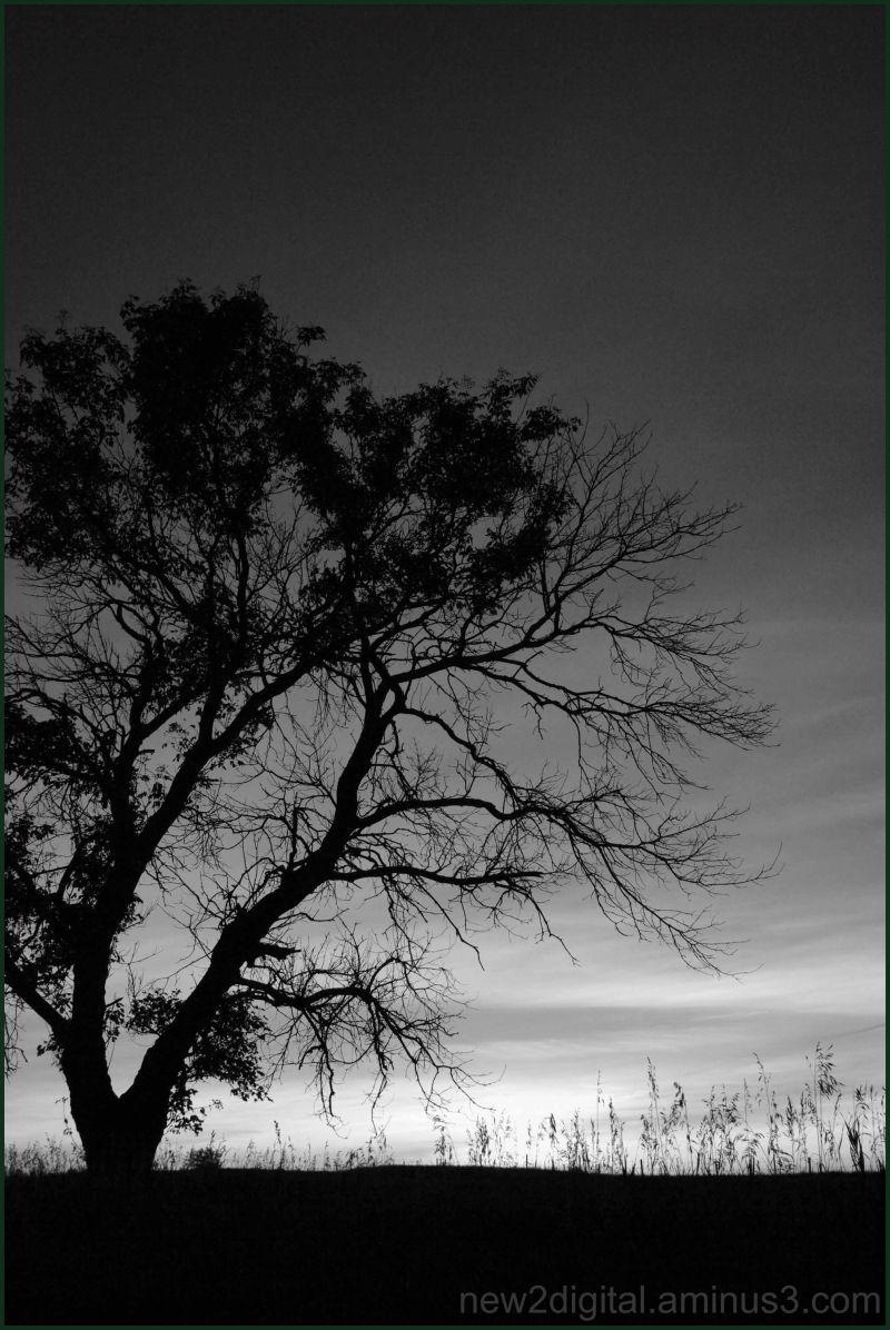 Ol' Tree