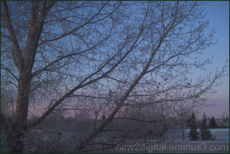 Frosty Morn