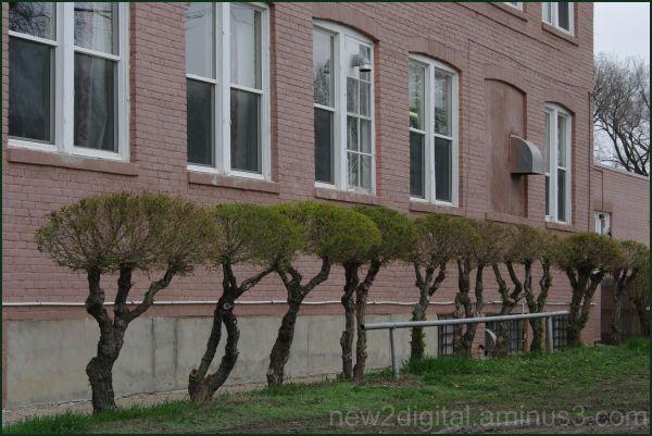 Window Trees