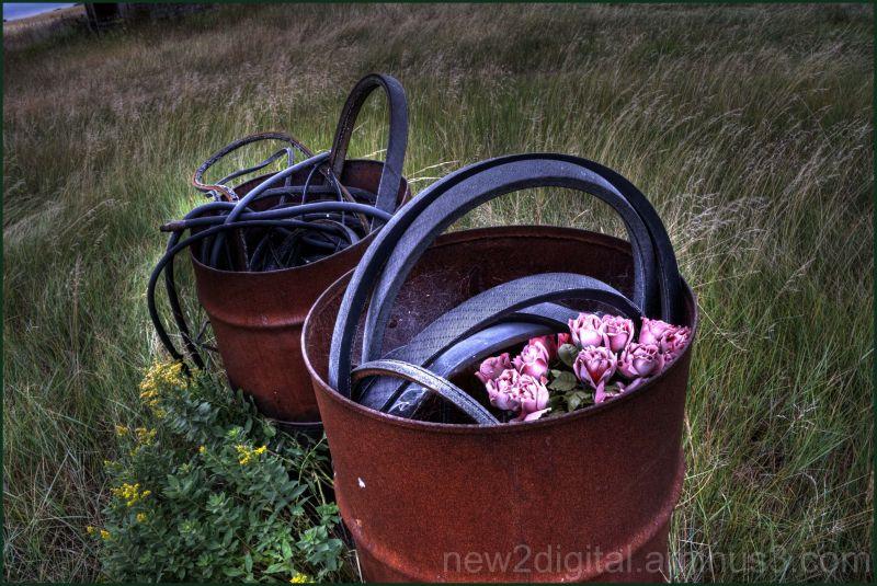 Belts & Roses?
