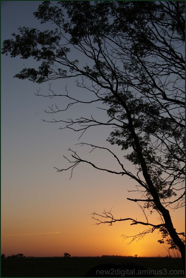 Simply Trees & Sunset
