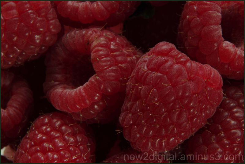 Raspberries - My Fav