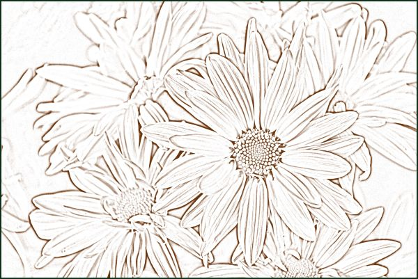 Etched Mums