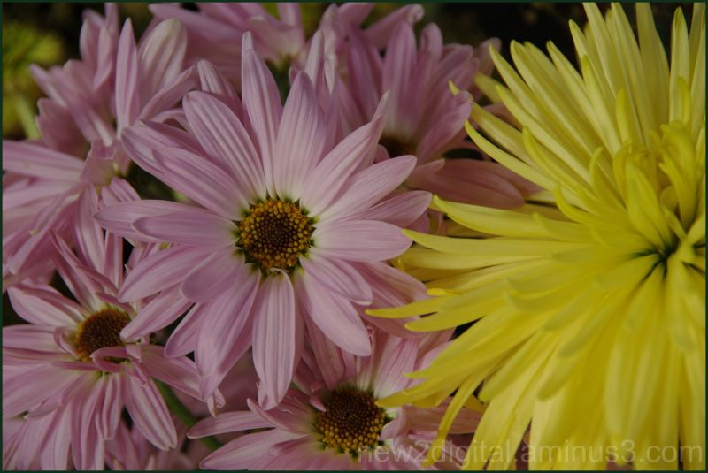 Yellow & Mauve - Easter Colours?