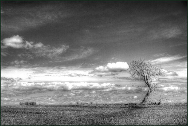 The Tree 1/3